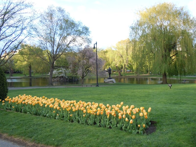 BOSTON COMMON PARK (198)