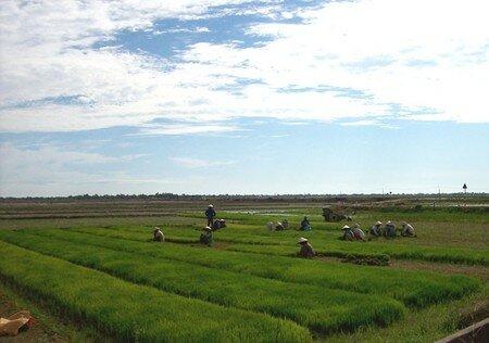 Vietnam_132_800