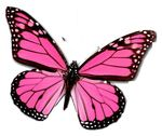 tumblr_static_pink_butterfly_pictures_1280221839