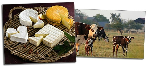 fromages_normandie