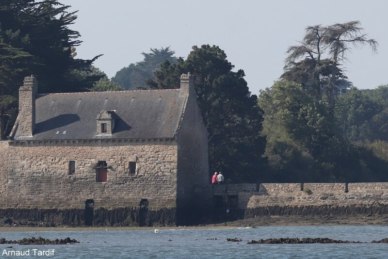 001321 Larmor-Baden - La Croisière du Golfe du Morbihan