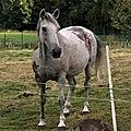 Belgique : vague d'attaques de chevaux et de bovins en région liégeoise. certains sont morts, d'autres sont gravement mutilés