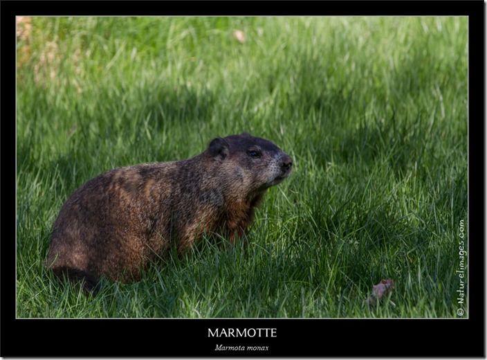 IMG_4670-naturelimages.com