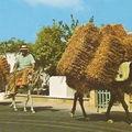 Un âne à Chypre - 5