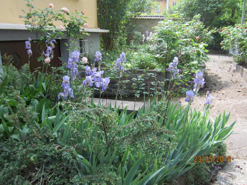 au jardin (1)