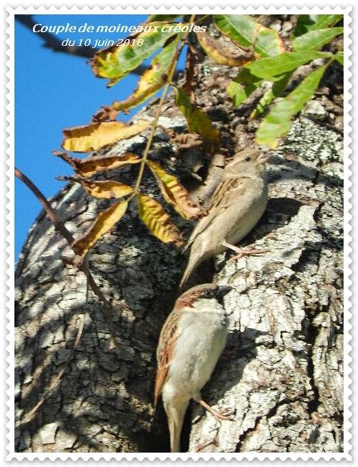 timbre oiseaux
