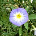 fleurs juillet 2010 047