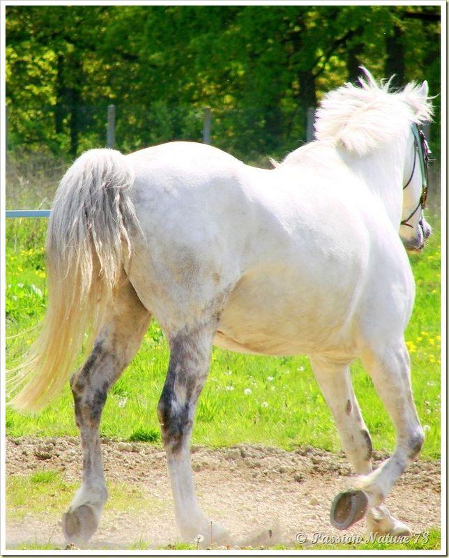 Dressage des chevaux 9