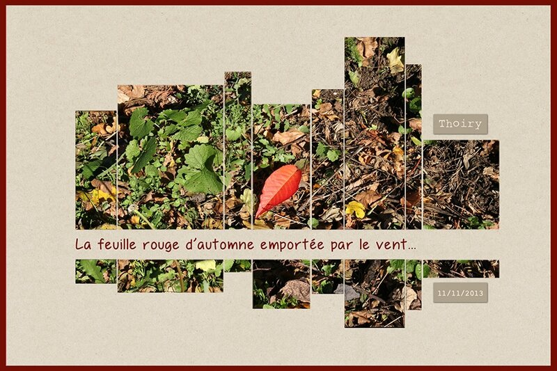 automne_feuille-rouge_900