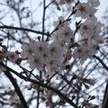 a a a aaarrivée du printemps