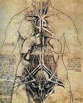 anatomie_Vinci