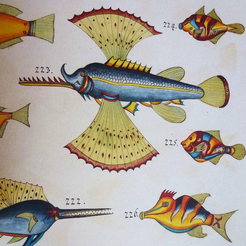poissons tropicaux 7