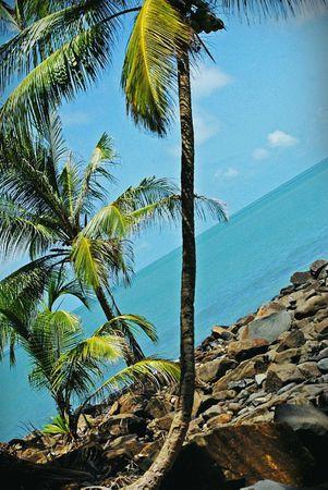 palmier2
