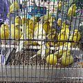 jaune_madeleine