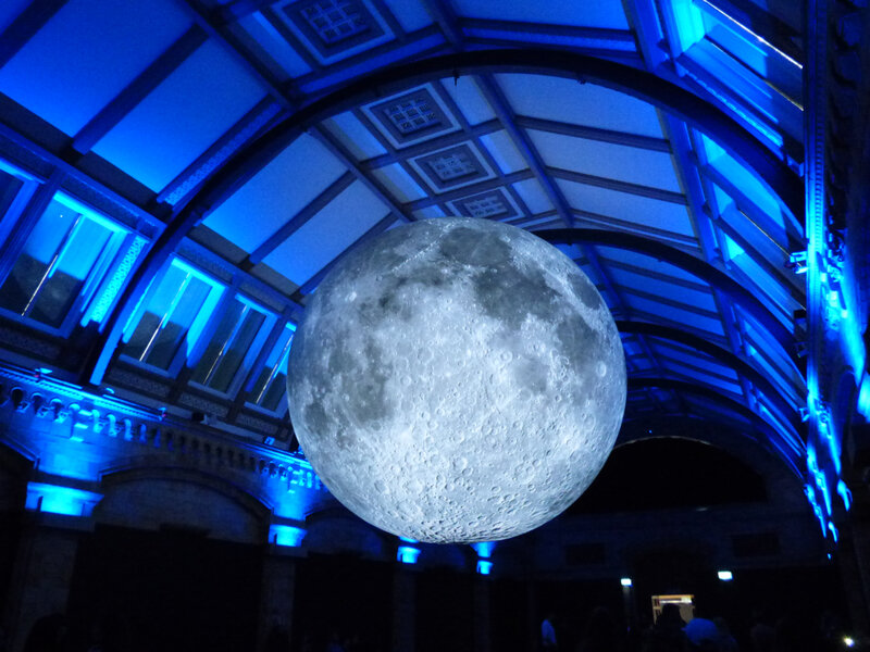 25 Londres Natural History Museum (38)