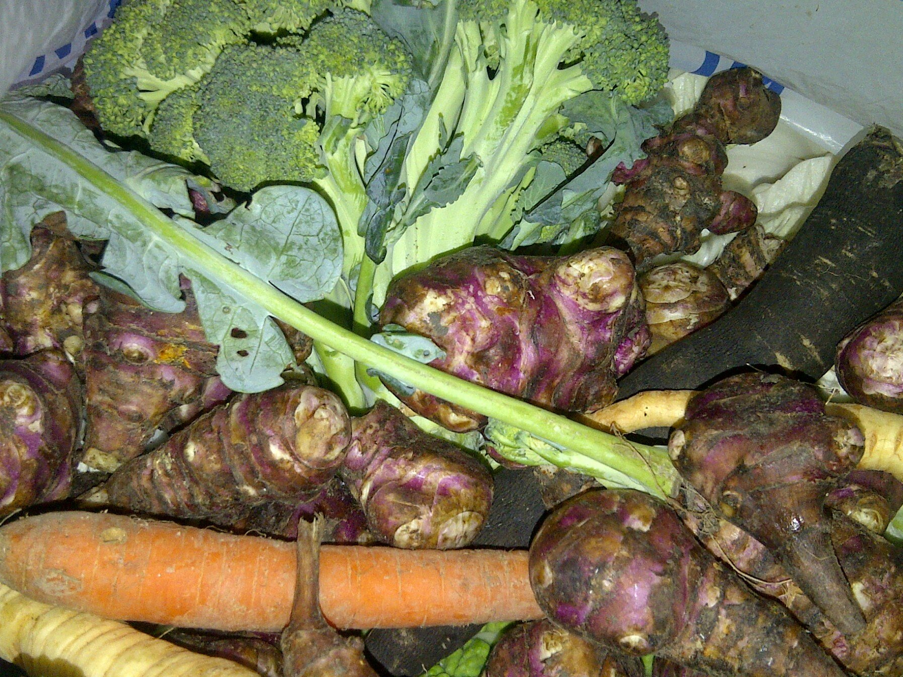 legumes RECUP (4)