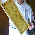 Récolte de miel...