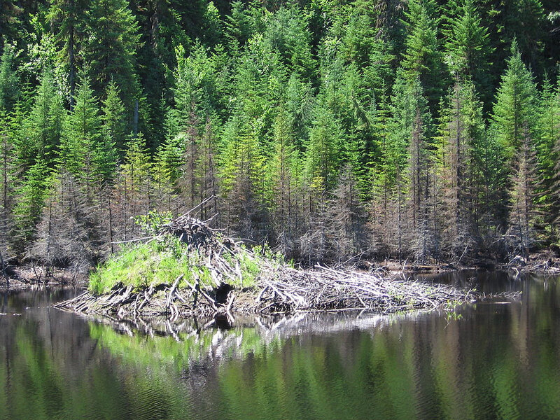 1024px-Beaver_lodge_north_of_Saguenay,_Quebec_2005-07-19