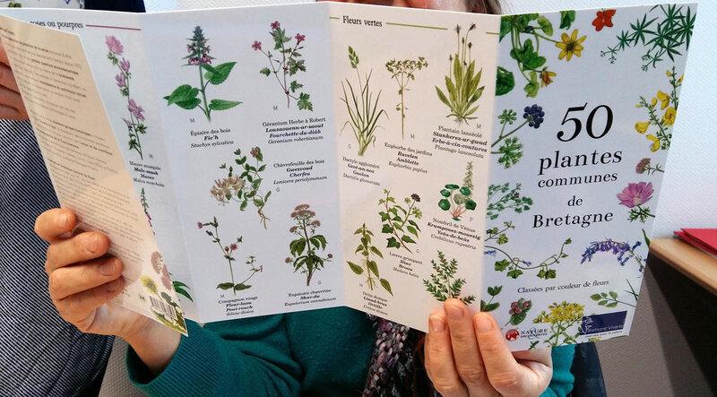 NOUVEAUTE-50-plantes-communes-de-Bretagne_image_h_600