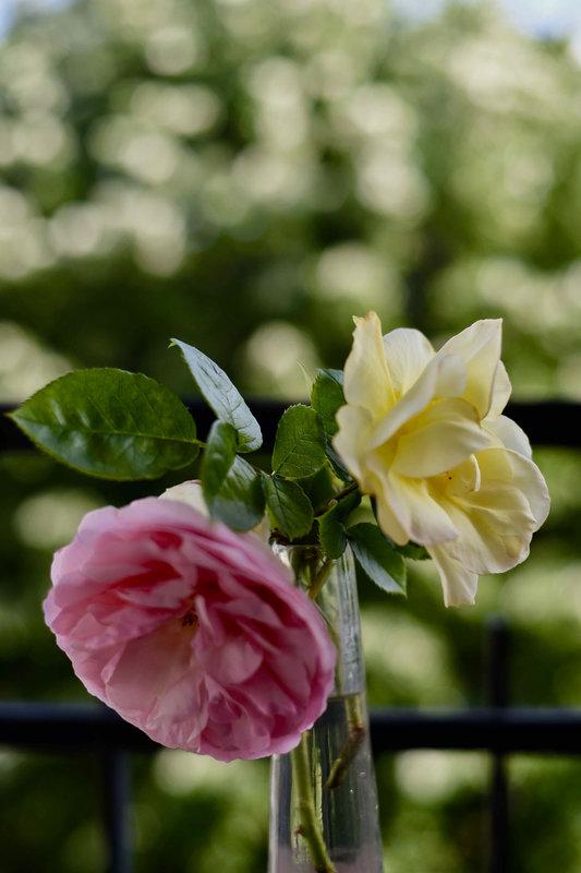 roses en duo - 1