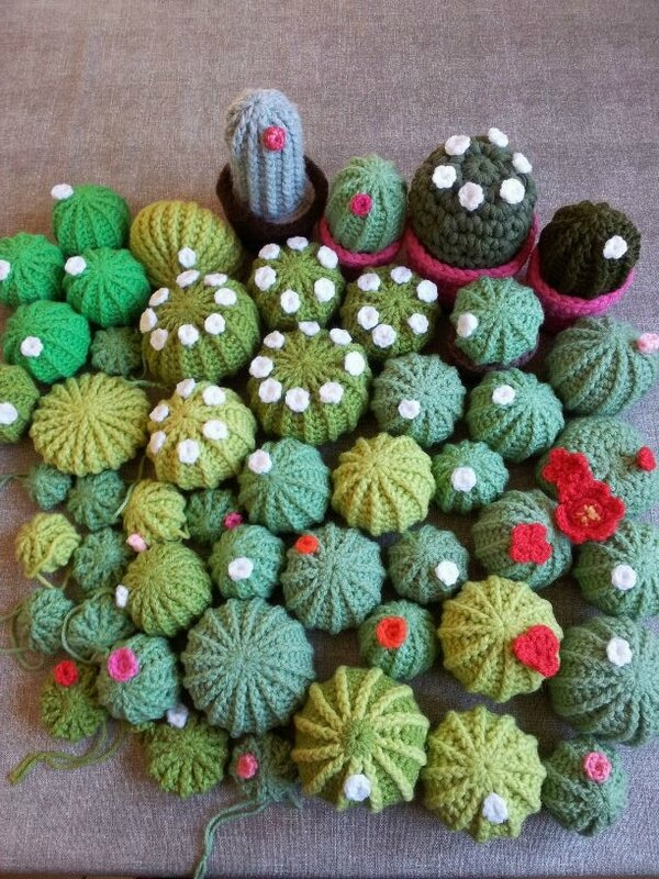 collection cactus 4