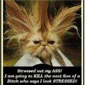 No stress??!!
