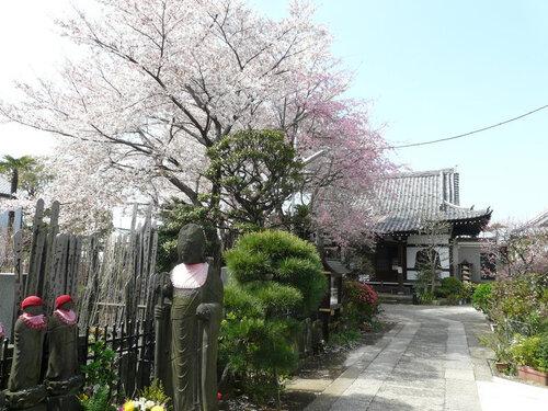 Canalblog Tokyo Cerisier 2010 Yanaka Cimetiere01