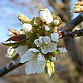 Le printemps est arrivé ..... à arthon