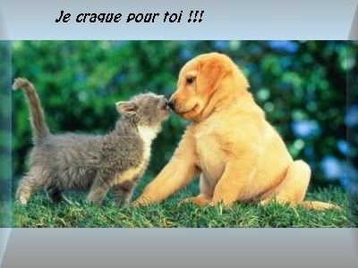 amour_chat_chien