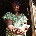 Sur le chemin de l'autonomisation de la femme rurale à travers l'aviculture améliorée