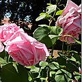 Windows-Live-Writer/jardin-charme_12604/DSCN0587_thumb