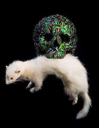 Jan Fabre, Skull (Ferret), 2001