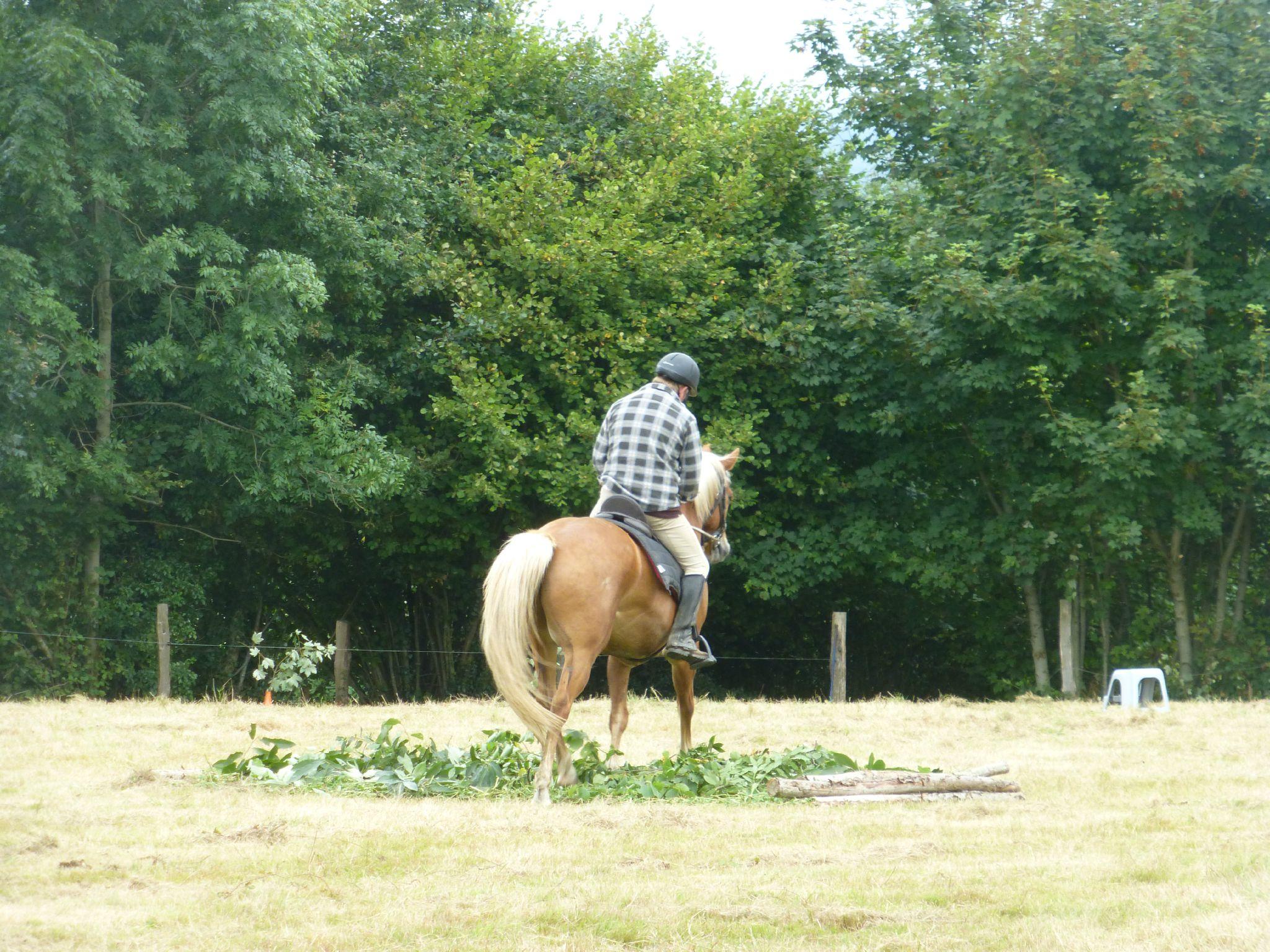 Jeux équestres manchots - parcours de pleine nature après-midi (245)