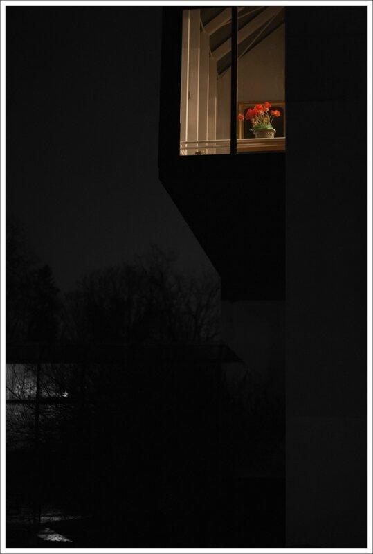 Ville fleur bureau nuit 090114 2
