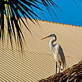 heron punta cana