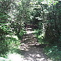 CAMORS-Circuit de l'eau en forêt de Camors