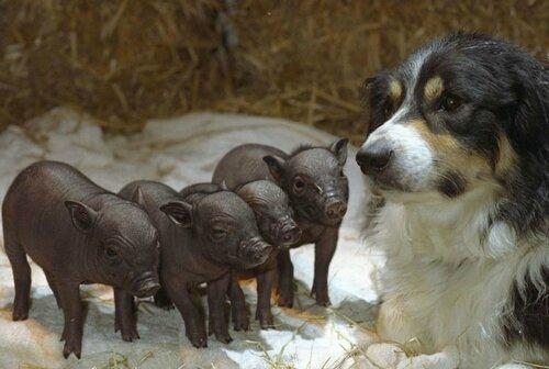 20-preuves-que-les-animaux-ont-un-grand-coeur-et-font-preuve-de-tendresse-avec-dautres-animaux7