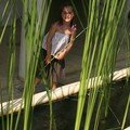 cache-cache dans les roseaux