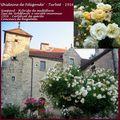 Roses anciennes orléanaises : 'Ghislaine de Féligonde'