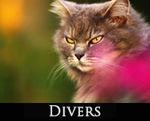 LIEN_divers