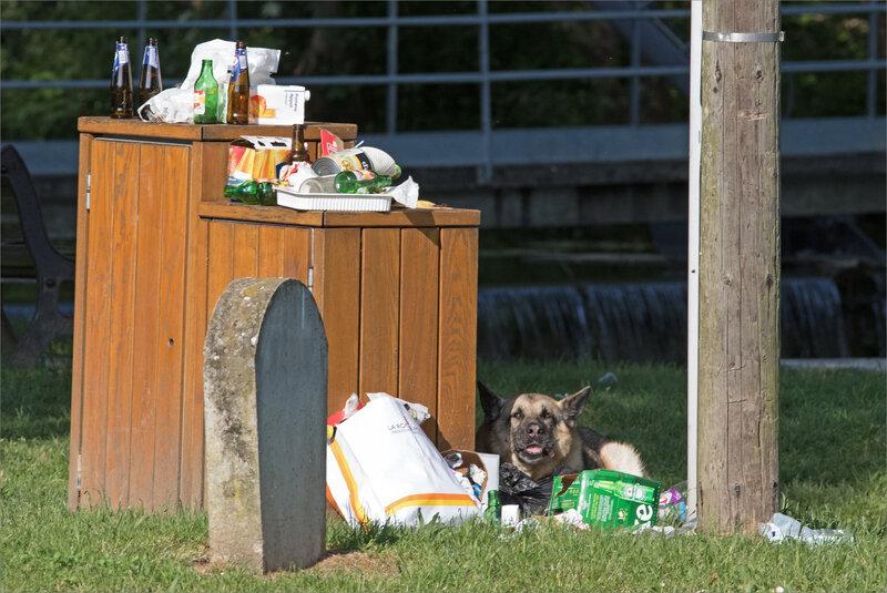 ville chien poubelle 0 matin 210518