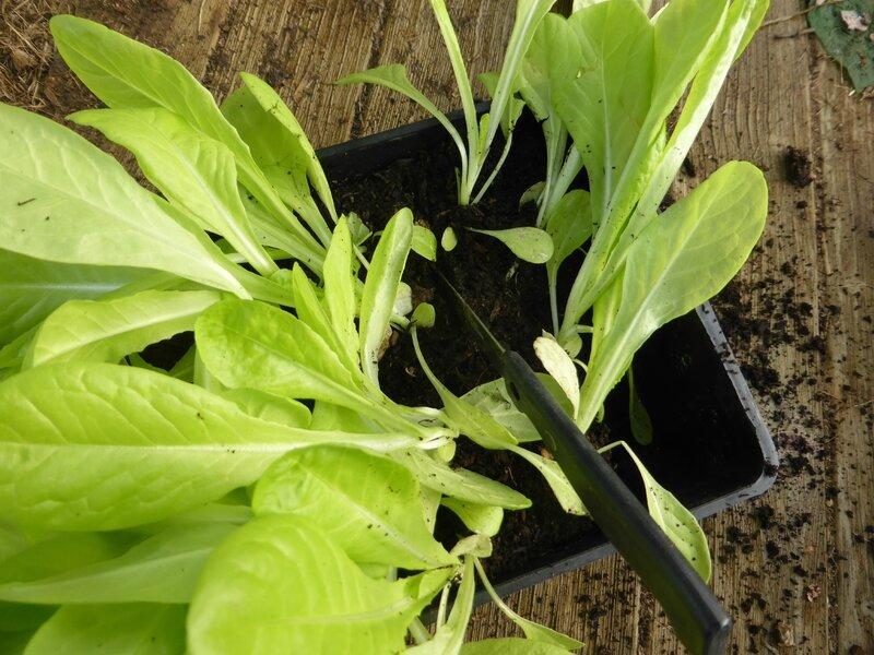 8-salade (7)