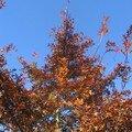 automne042