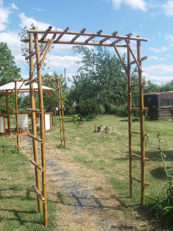 Bambou Graine De Tortue