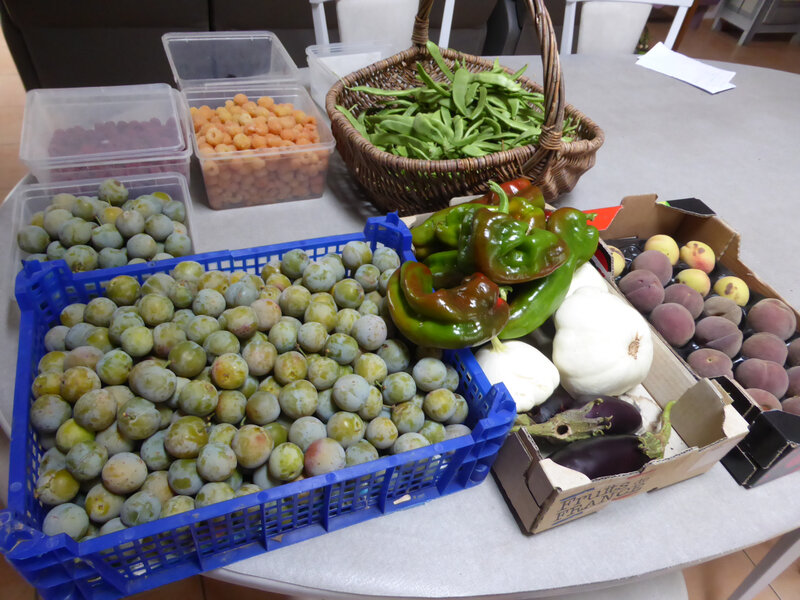 9-figues, haricots, poivrons, pêches, framboises, prunes