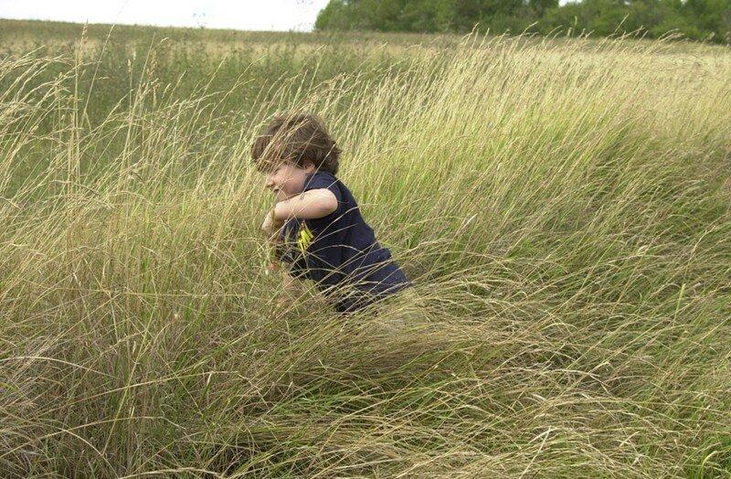 dans les herbes folles