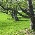 t-IMG_25332[1]