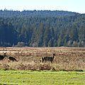 Les redwoods, ...