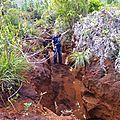 23 - greslania rivularis - les bambous endémiques de nouvelle-calédonie