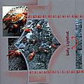 crabe Nininha primeira pagina